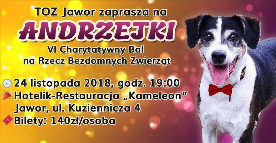 6. Charytatywny Bal Andrzejkowy na Rzecz Bezdomnych Zwierząt już niebawem!